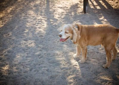 doggies_0216