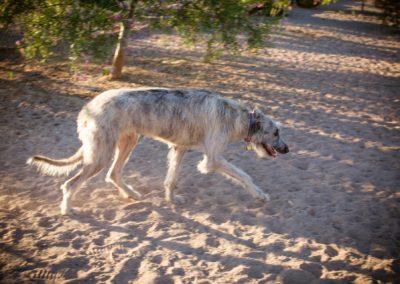 doggies_0438