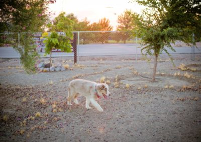 doggies_0584