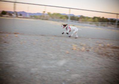 doggies_0706