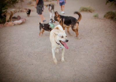doggies_0752