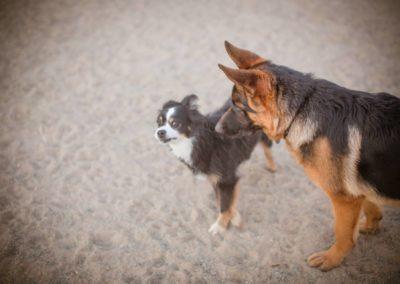 doggies_0792